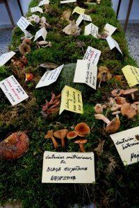 Izložba gljiva, Draguzeti